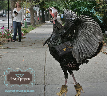 The World's Most Stylish Turkey